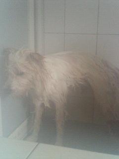 ひと風呂浴びました